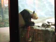 More Panda