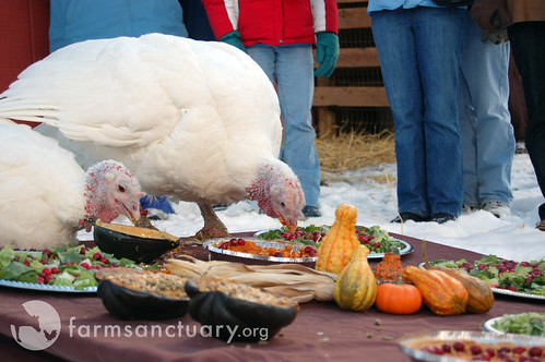 2008 NY Celebration FOR the Turkeys
