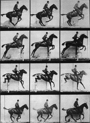 Muybridge's horses