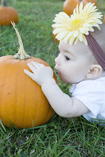 Pumpkin147