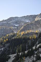 North Cascades October 2009 036 (wildcelticrose) Tags: washington pass larch northcascadesoctober2009