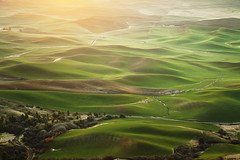 Palouse Daybreak: Steptoe Butte SP, Washington (Ivan Sohrakoff) Tags: barn sunrise landscape washington butte shadows farm wheat hills soil wsu pullman crops farmer agriculture colfax palouse freshstart easternwashington landscapephotography steptoe palousehills wondersofnature steptoebutte steptoebuttestatepark washingtonlandscape ivansohrakoff washingtonfarming washingtonagriculture