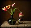 Still Life - Pride (kevsyd) Tags: tulips 645d kevinbest stilllifephotograph