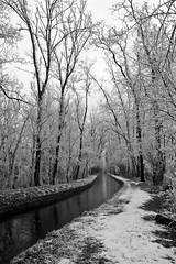 Il Bosco Incantato (Luca Morlok) Tags: wood winter italy snow milan cold tree gelo water alberi river italia milano freeze neve breeze acqua piante inverno lombardia freddo canale boschetto bosco foresta lombardy arluno lecronachedinarnia poglianasca