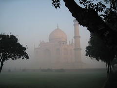 taj mahal through the trees