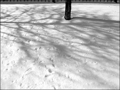 DAY 261 (citytripod) Tags: blackandwhite white snow chicago tree canon fence shadows footprints ave 365 damen g9 365ers