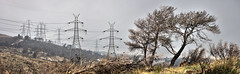 scorched pendeli: a panorama (helen sotiriadis) Tags: panorama forest canon fire published athens greece burn hdr photomatix penteli canonef100mmf28macrousm pendeli  canoneos40d  toomanytribbles