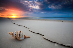 The Shell (Garry - www.visionandimagination.com) Tags: sunset beach nature water canon photography sand flickr oz shell photographers australia wideangle crack explore zen chapeau creativecommons qld getty 5d capture aus fraserisland dreamland soe minimalist finest herveybay dreamscape viewfinder the stockphotography leadinglines minimalistlandscape verylow imagepoetry bestshoot digitalphotographyschool abigfave manvswild anawesomeshot impressedbeauty aplusphoto platypusbay citrit ef1635mmf28liiusm moonpoint auselite theunforgettablepictures overtheexcellence clickcamera theperfectphotographer trueessence artinoneshot sensationalphoto themonalisasmile capturethefinest greatsandymarinepark wwwvisionandimaginationcom