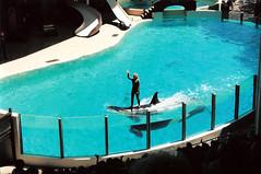 1Marineland_2004_02 (emzepe) Tags: show park ca ontario canada 2004 standing zoo back marine killing niagara theme whale orca delfin 19 dolphinarium marineland kanada on orka nyár június akvárium bemutató gyilkos vidámpark bálna áll hátán idomár kardszárnyú delfinárium óceanárium állva