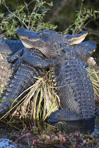 Everglades National Park - 009