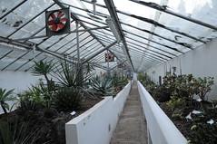 botanico 166 (blum1) Tags: cactus botanico ortobotanico