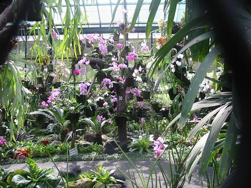 Indrukwekkende orchideeënserre