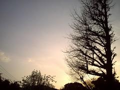 sunset...蛍光灯