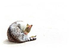 Over Cat ( ) Tags: art canon photo iran iranian  amirzebarjad photobyamirzebarjad