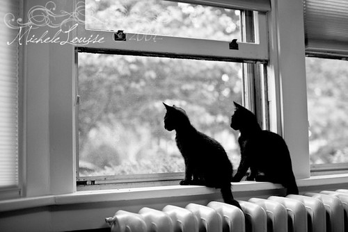 Window Kitties