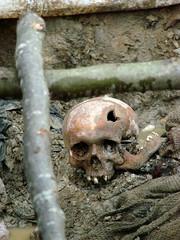 Srebrenica Massacre - Massacre Victim 2 - Potocari 2007 (Adam Jones, Ph.D. - Global Photo Archive) Tags: skull victim photojournalism sharealike exhumed imagebank massgrave srebrenica bosniaandherzegovina adamjones freeimages srebrenicamassacre adamjonesfreeserverscom pocitari creativecommons20