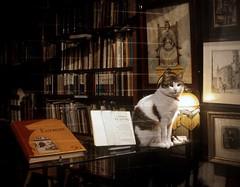 Barna: Per a la Cris -  Gat i Llibreria (South Latitude) Tags: barcelona cat gat barrigotic barna llibreria