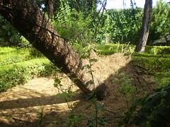 Tras la tormenta (Jacinto Lajas) Tags: casa lluvia viento patio granizo rbol tormenta cedro pedernoso