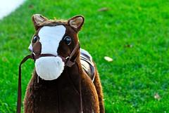 DSC_0078 (Cary Veech) Tags: horse toy pony ponyplay horseyplay