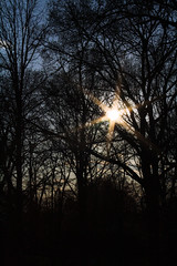 Winters Sunset (Orie Lawn) Tags: blue trees winter light sunset sky cloud sun forest outdoors star twilight woods bright branches solstice sunflare