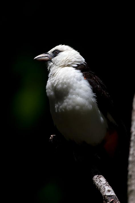 051111_bird04
