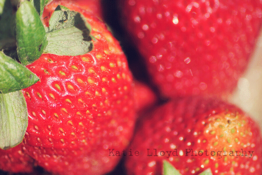 2011-06-13_strawberries_014