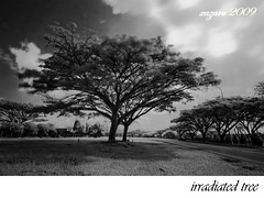 irradiated tree, cokin (xazzz) Tags: d50 infrared cokin sigma1020mmf456