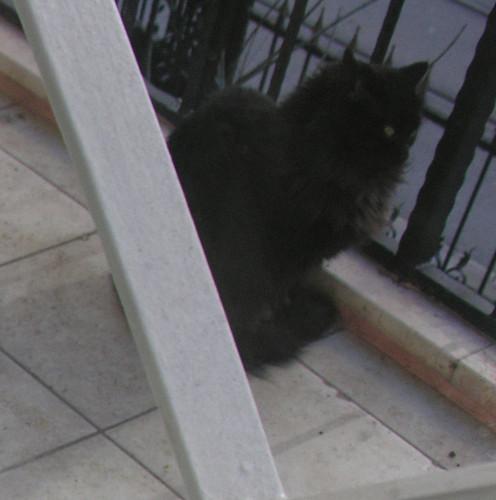 A cuki fekete macsek