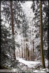 winterwonderland (G.Hotz Photography (busy as a bee =)) Tags: wood winter portrait people food lake alps photography austria dornbirn feldkirch österreich stillleben foto fotograf fotografie hard bregenz gerald photograph bodensee constance bludenz oesterreich vorarlberg produkt hotz hochzeitsfotograf ondarena fotolyst