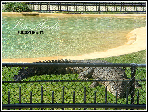 Australian Zoo: The Crocoseum