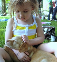 Puppy Love (Clara Hinton) Tags: puppy yellowlab loveit 1001nights tender amara puppylove ohhhh beautysecret labpuppy isawyoufirst childandpuppy clarahinton flickrlovers