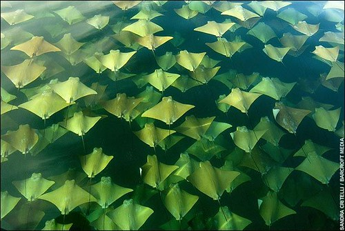 Ray Migration
