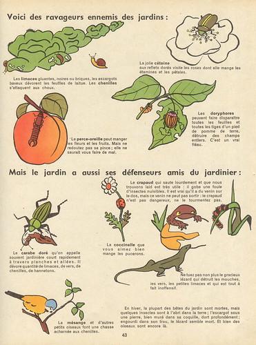 fleursfruitsbetes 42