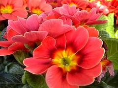 A Touch of Spring (ismith2808) Tags: friends plants flower nature smörgåsbord sweetshot colourartaward colourartawards llovemypic appenninosettentrionalealpinatura screamofthephotographer photographersgonewild atmphotography