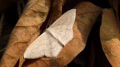 Leaf and moth