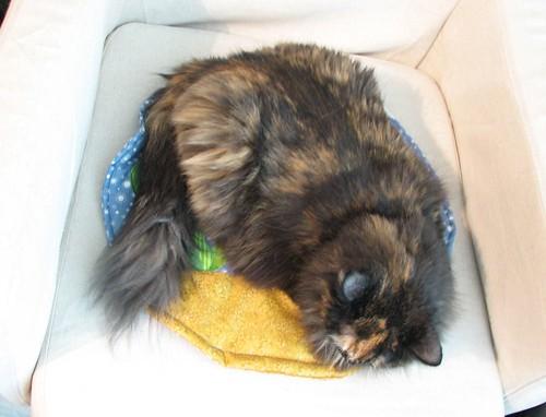 Fishbowl cat quilt30