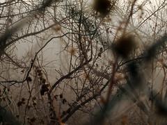 Foggy Orchard (cuvycuv) Tags: daegu siji