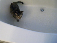 Maggie in the tub with water