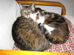 bimbo and tiger (ruthug08(on and off)) Tags: cats chats tiger gatos bimbo katzen kediler