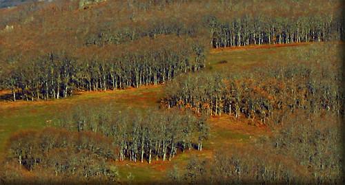 Bosque de manchas