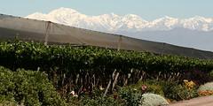 Los productores de vino casero quedaron satisfechos con el asesoramiento del INV