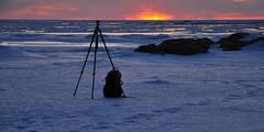 Natural backdrop (oxycoccos) Tags: schnee winter snow ice nature finland landscape outdoors vinter twilight finnland snö snø winterlandscape winterlandschaft winterscene paysagedhiver vinterlandskap