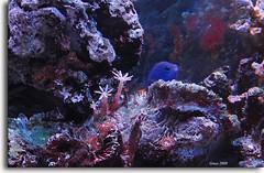 ...emergenze.... (gneopompeo) Tags: rocce acqua acquario luce pesceblu
