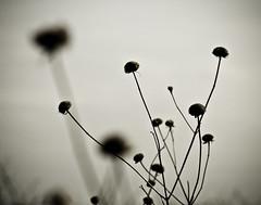 its some alien pod planty thing (j / f / photos) Tags: deleteme5 deleteme8 plant deleteme deleteme2 deleteme4 deleteme6 deleteme9 deleteme7 pod saveme2 deleteme10 deletme3 alienpodplantything