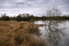 England: Northamptonshire - Overflow (Tim Blessed) Tags: uk trees sky nature water reeds islands landscapes scenery lakes wetlands ponds singlerawtonemapped
