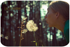 I'll Huff and I'll Puff.... (nate@nderson) Tags: woman forest bokeh blowing dandelion lifeexpressions