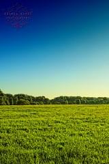 (AndreaKamal.com) Tags: blue trees summer sky green field grass forest germany landscape deutschland sommer hamburg feld wiese gras sundaymorning landschaft naturschutzgebiet natureprotectionarea andreakamalphotography wwwandreakamalcom