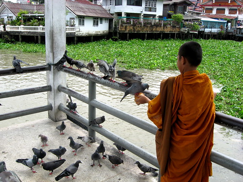 Young monk feeding pigeons