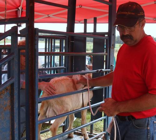 Jim Pritchard scans a goat
