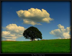 bei Much - lonely tree (NPPhotographie) Tags: summer sky tree art grass clouds fence landscape creative oberberg soe lonleytree platinumphoto flickrdiamond theunforgettablepictures thesecretlifeoftrees vanagram artofimages saariysqualitypictures bestcapturesaoi kunstgriffskunstgriffe